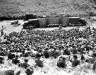 Normandy 1944 Collection 425