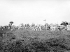 Normandy 1944 Collection 430