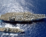 CVN-76 USS Ronald Reagan 2
