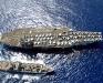 CVN-76 USS Ronald Reagan 2