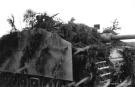 Eastern Front Collection 447
