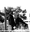Normandy 1944 Collection 43