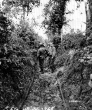 Normandy 1944 Collection 293