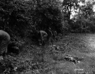 Normandy 1944 Collection 307