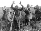 Eastern Front Collection 1257