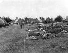 Normandy 1944 Collection 885
